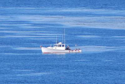 The scratching post la jolla fishing boat for La jolla fishing