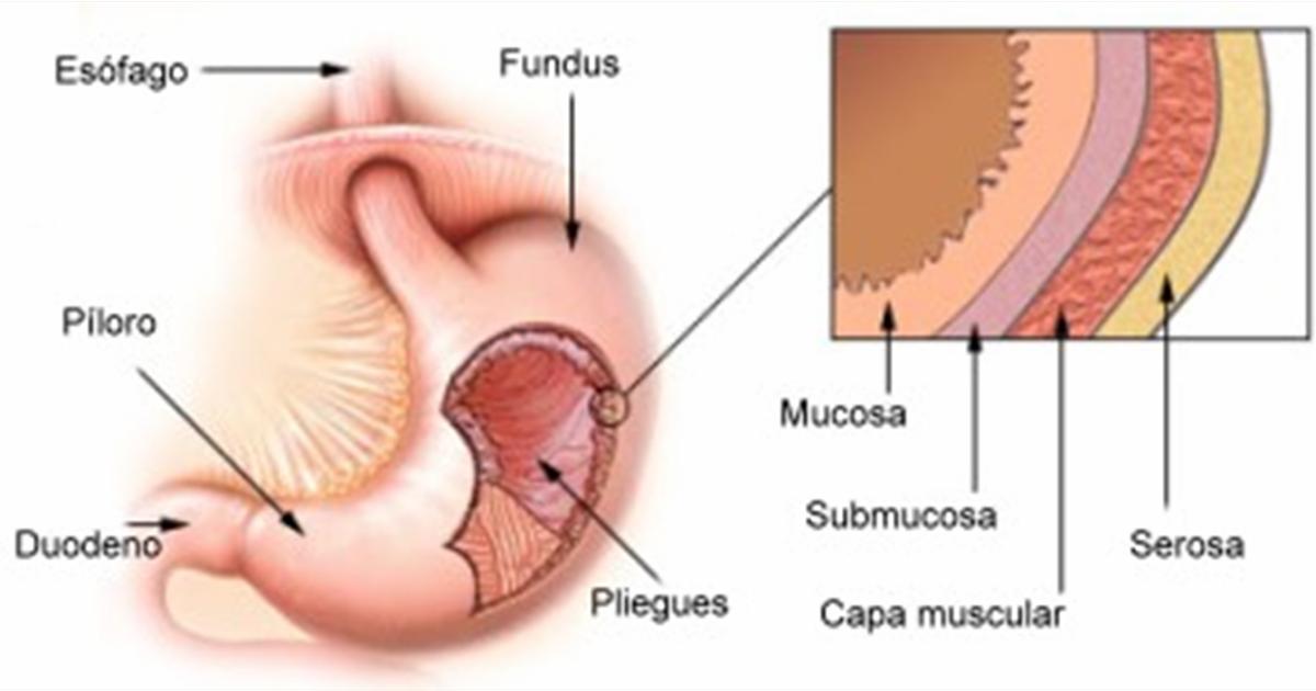 MediGuia: Úlcera Péptica
