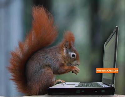 Hola buenas, amigos - Página 2 Ardilla-y-laptops