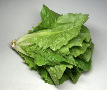 آلعظآمْ romaine_lettuce.jpg