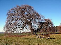 das.árvores