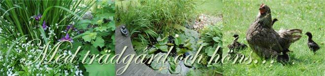 Med trädgård och höns...