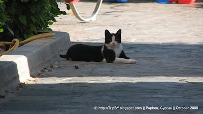 Коты Кипра by TripBY.info