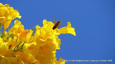 Пчела в полете by TripBY.info