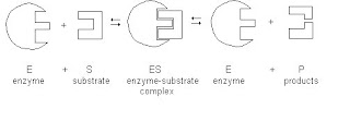 Sum academy larkana mcq test chapter3 enzymes c lock and key model d reflective index model ccuart Image collections