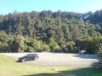 Look at the Kauri canopy