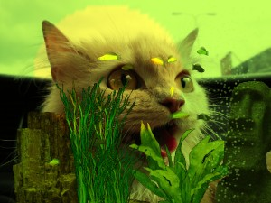 The cat 3d screensaver screensaver animated for Moving fish for cats