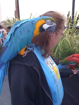 Macaw lady