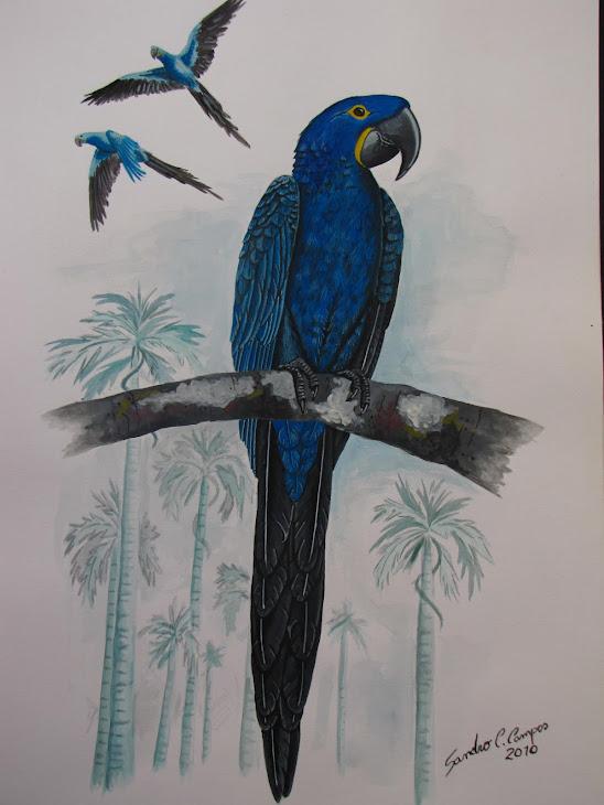 Arara Azul Grande- Anodorhynchus hyacinthinus