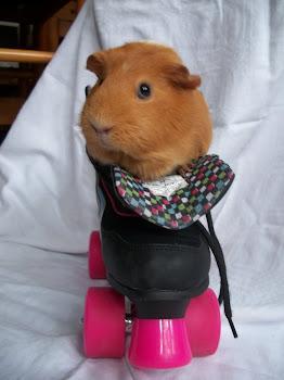 pig in skates
