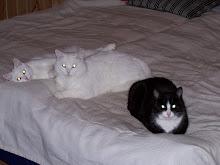 Våra katter