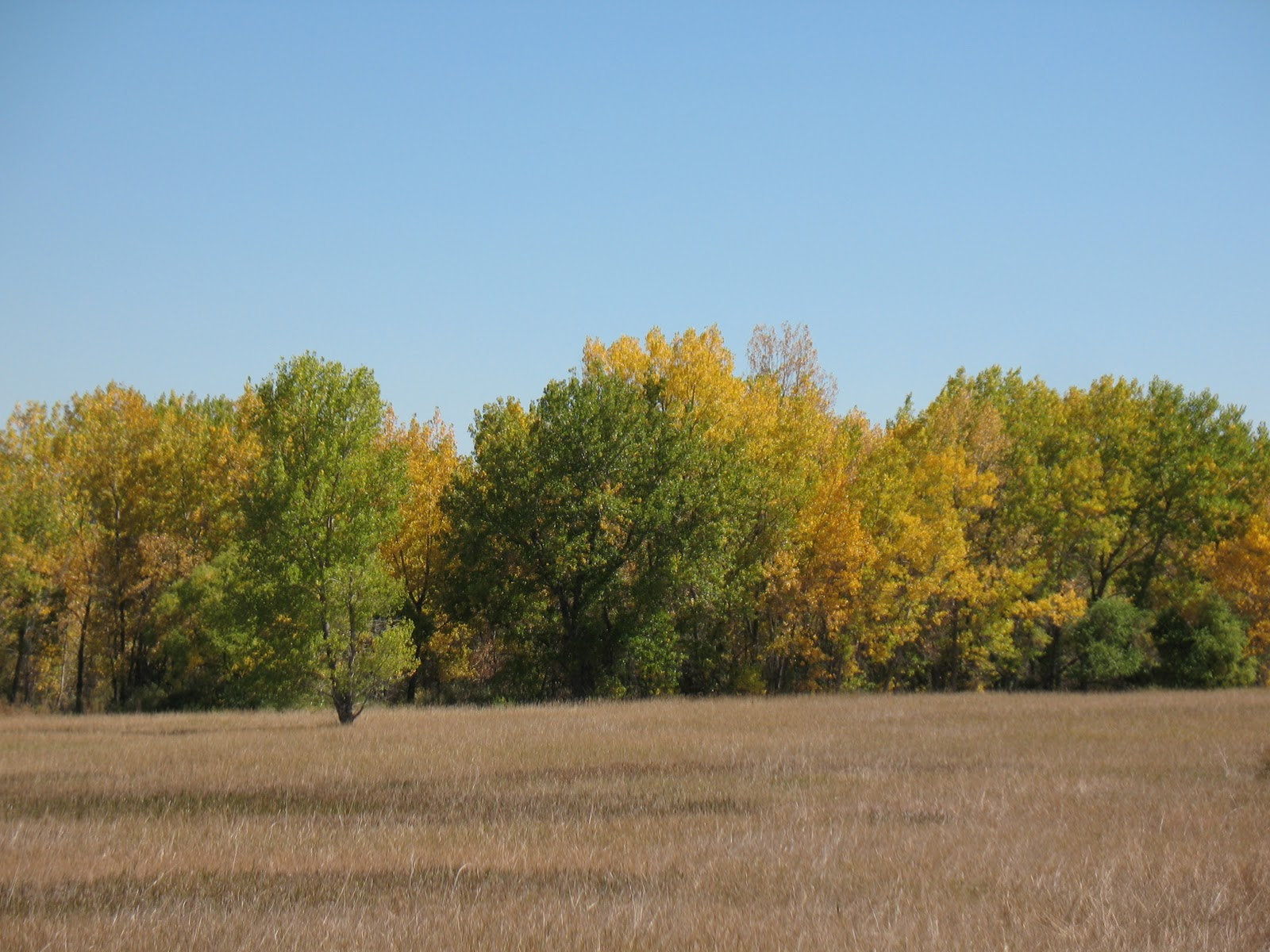 Come what come may early fall at cherry creek state park for Cherry creek