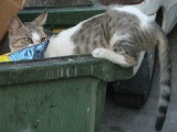 Dumpster Kitty