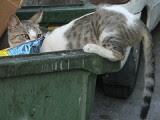 Dumpster Kitty