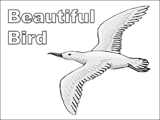 Simple Bird Coloring Pages