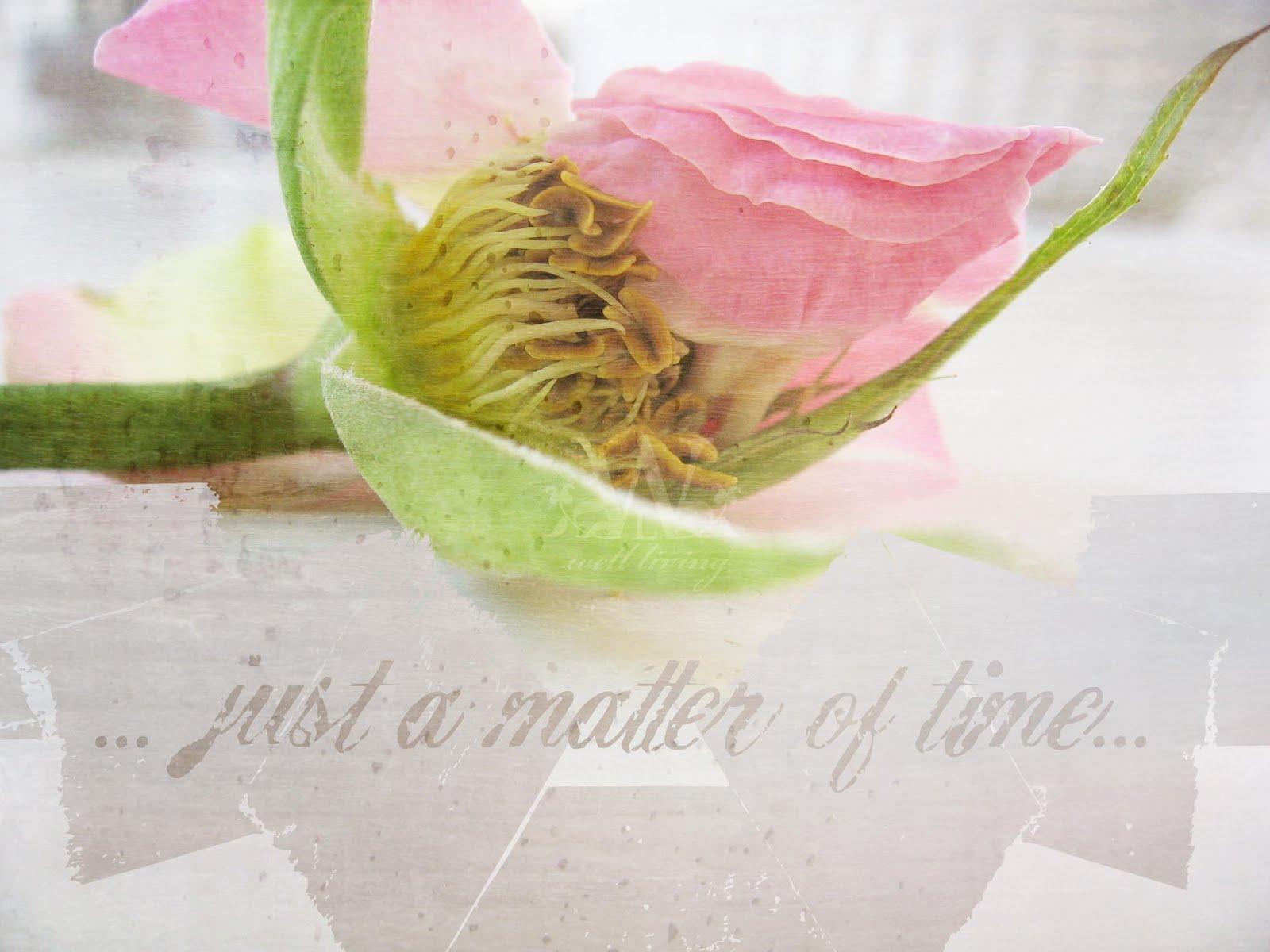 http://1.bp.blogspot.com/_vGuBhXbtgU8/TFMr4Z6OVoI/AAAAAAAAAmA/q4W6qsAyF5Y/s1600/wallpaper_rose.jpg