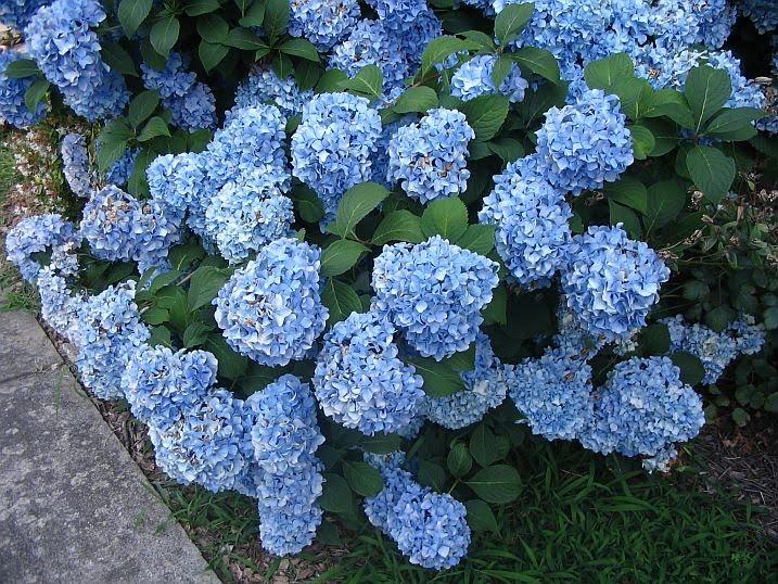 Flower Inspiration Blue Bouquets