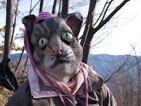 Maschera di gatto alle pendici di Monte Fuso