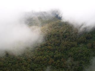 Blue Mountains - Eucalipti nella nebbia
