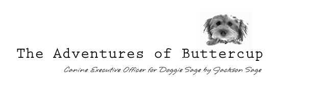 The Adventures of Buttercup