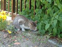 草を食む猫