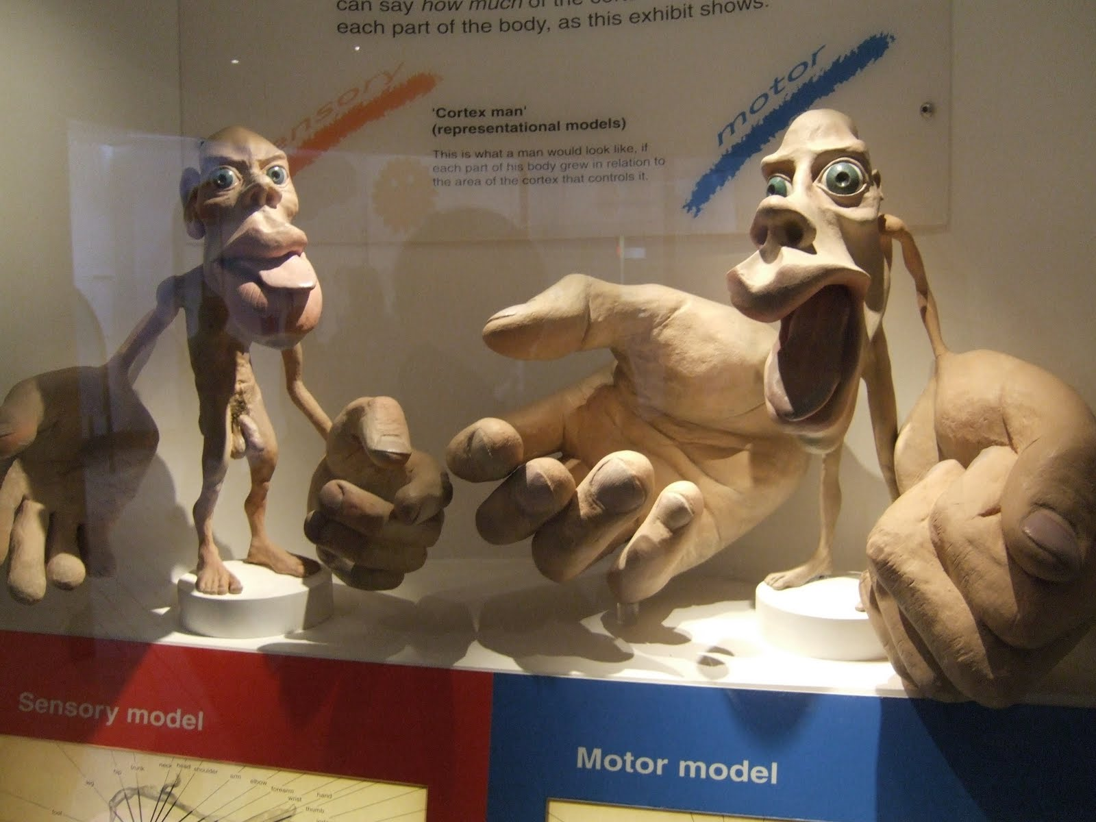 Homunculus London Natural History Museum