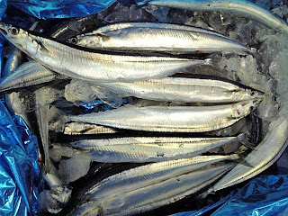 sanma fish (pacific sauly)