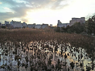 shinobazu pond in ueno park