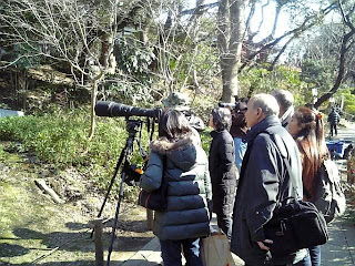 bird watching in ueno park