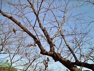 small birds on the tree in ueno park