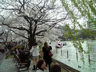 shinobazu pond in cherry blossom season