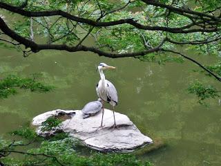 heron in hibiya park