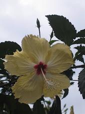 SAN JUAQUIN