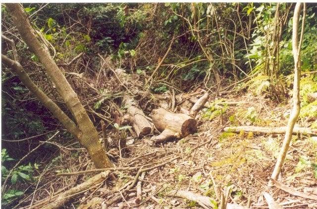 La contaminacion ambiental la tala de arboles causa de la for Tala de arboles madrid