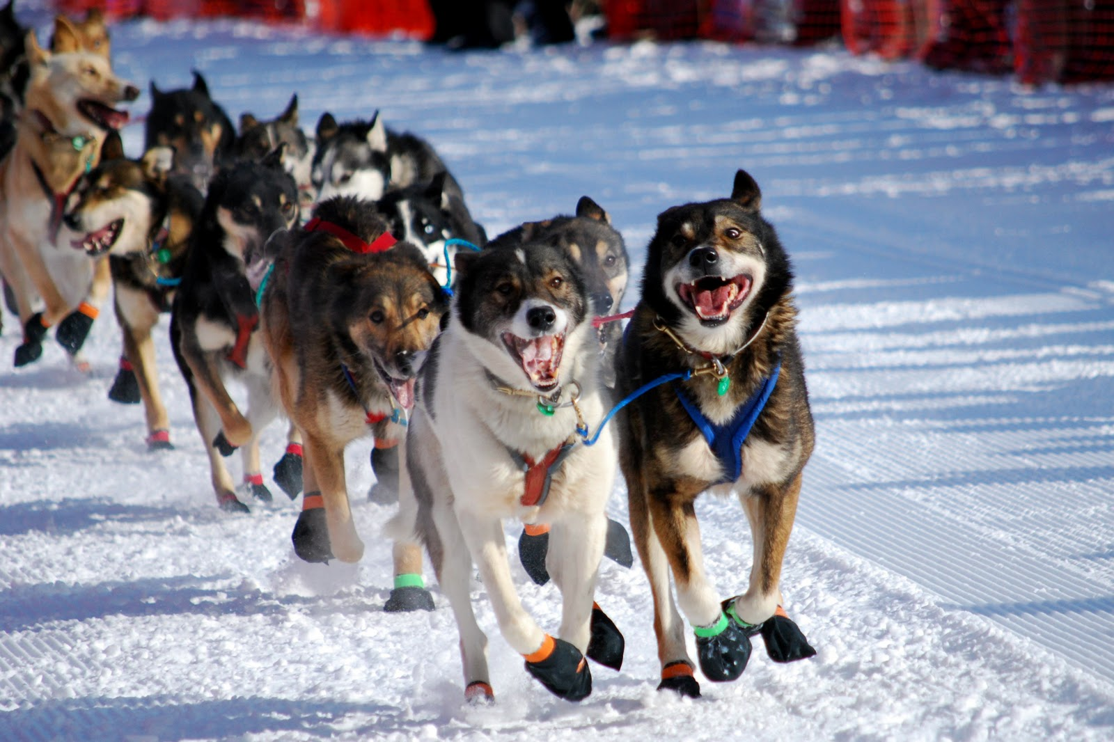 how to build an alaskan dog sled