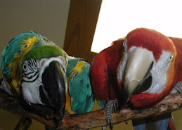 N.W. Bird Rescue Logo Birds