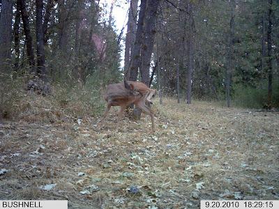 Deer Licking
