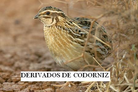 DERIVADOS DE CODORNIZ