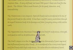 New Companion, Meerkat