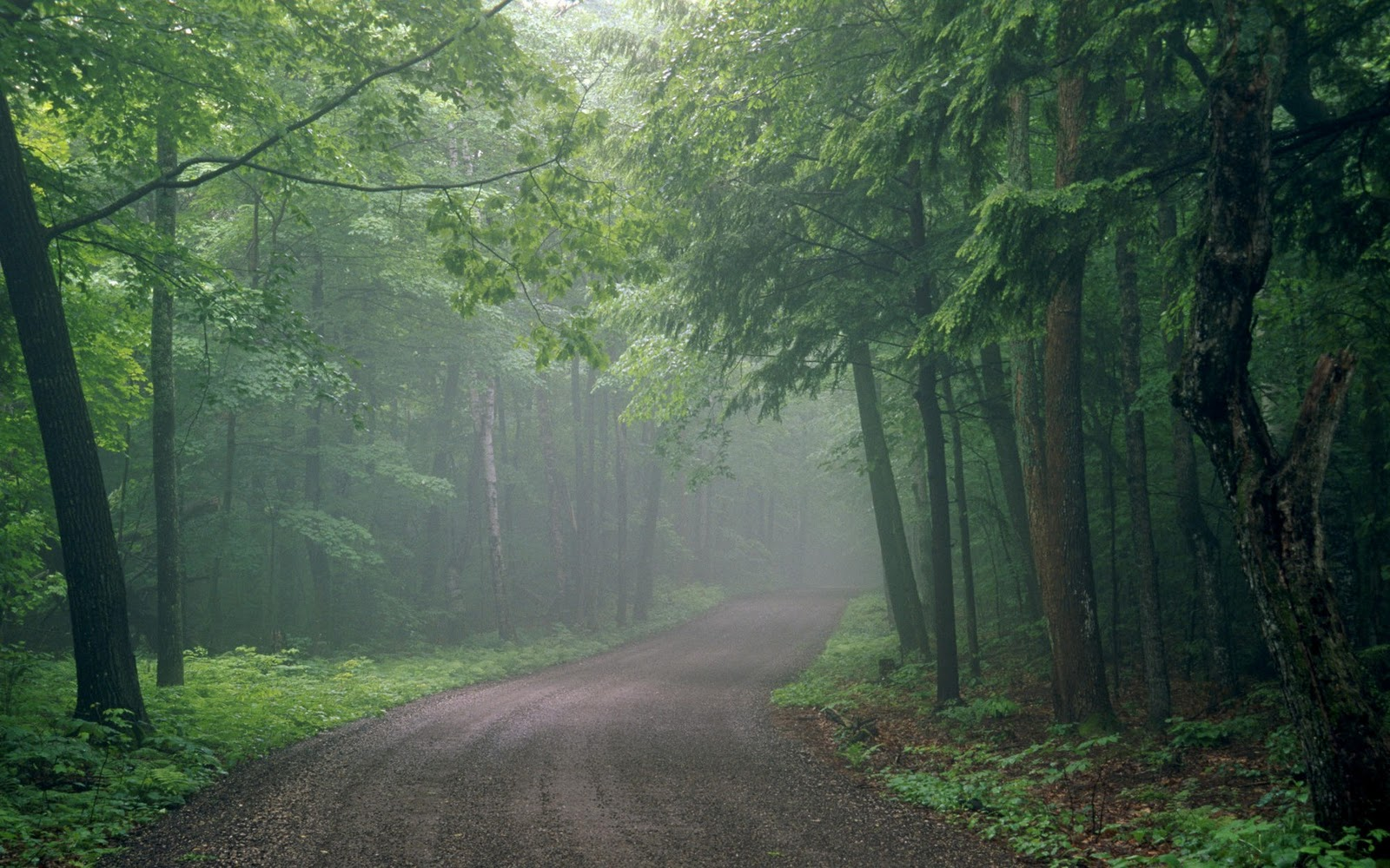 lush green forest wallpaper - photo #2