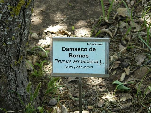 Bornichos por el mundo damascos de bornos en el jard n for Guarderia el jardin san fernando