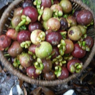 diocese d 39 inongo les arbres fruitiers et les fruits. Black Bedroom Furniture Sets. Home Design Ideas