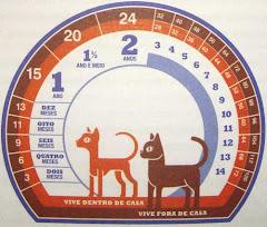 Idade dos Gatos