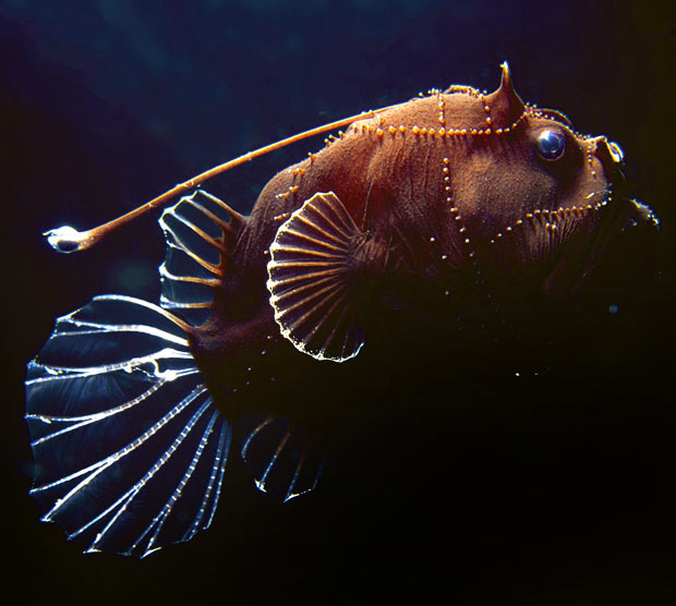 Cine utsav scientists discover bizarre deep sea creatures for Weird deep sea fish