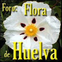 FORO: Flora de Huelva