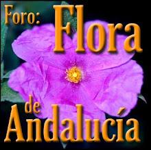 FORO: Flora de Andalucía