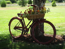 Nonnie's Oregon Bike