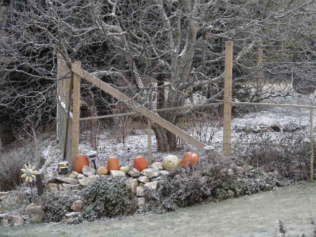 [December+Pumpkins]