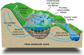 This is a picture of a wetland diagram.