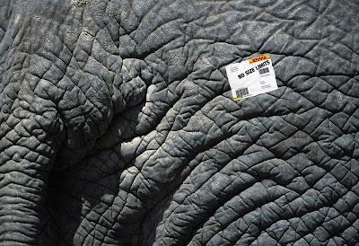 Az elefánt is belefér a csomagba??
